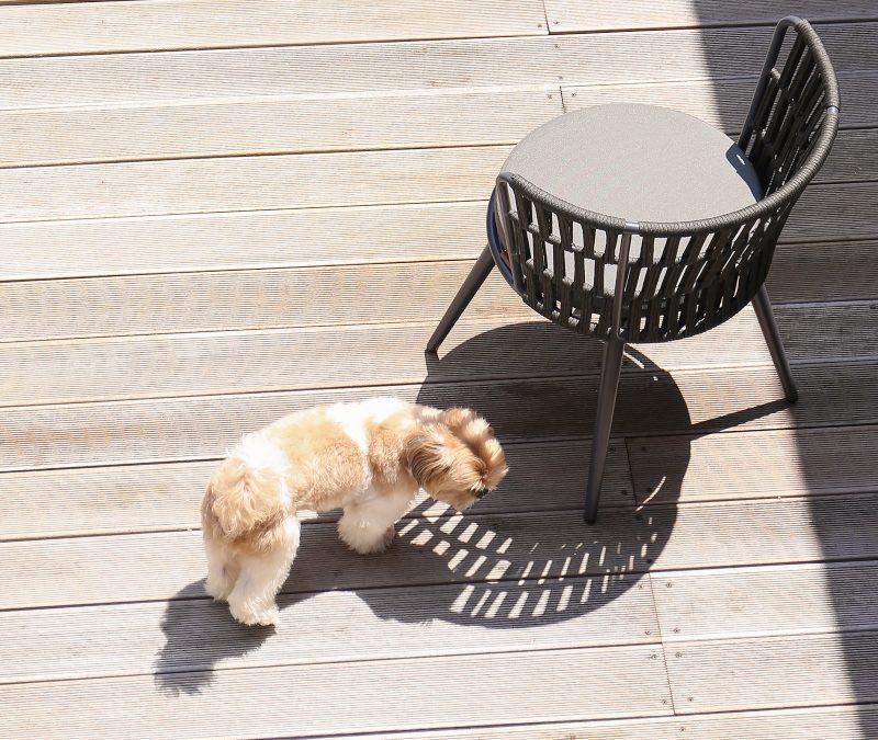 DAISY RAE Dining Chair